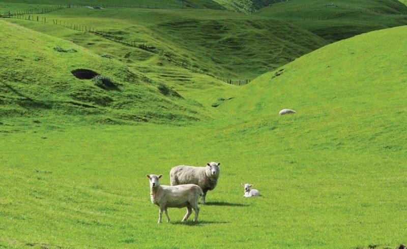 The Lamb Company